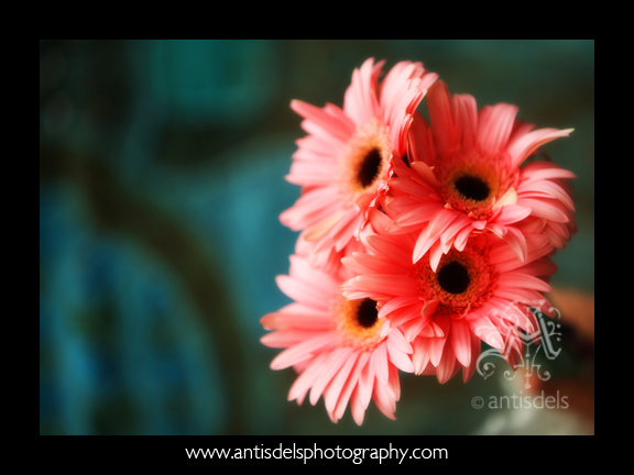 Jordanflowers001_2