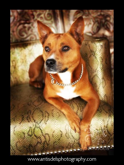 Fancydog5